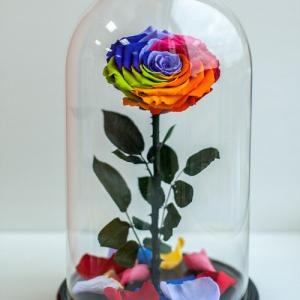 Радужная неувядающая роза в стеклянной колбе