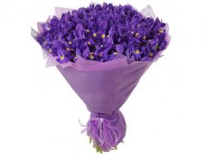 51 фиолетовый ирис