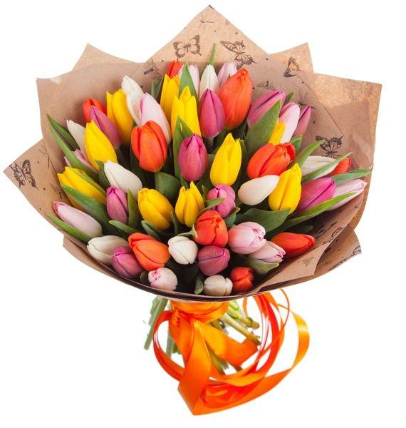 51 разноцветный голландский тюльпан