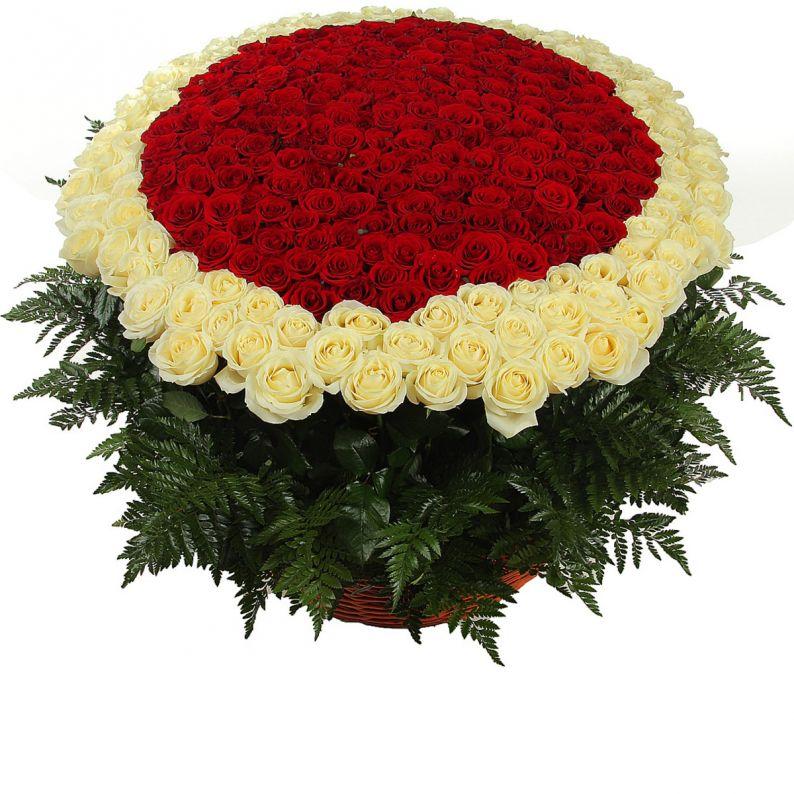 1001 роза красная и белая
