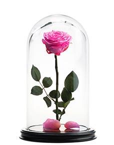 Розовая неувядающая роза в стеклянной колбе