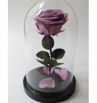 Сиреневая роза в стеклянной колбе
