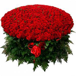 1001 роза красная