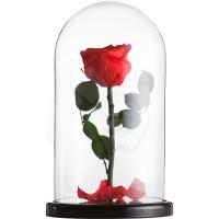Красная роза в стеклянной колбе не вянет более 5 лет